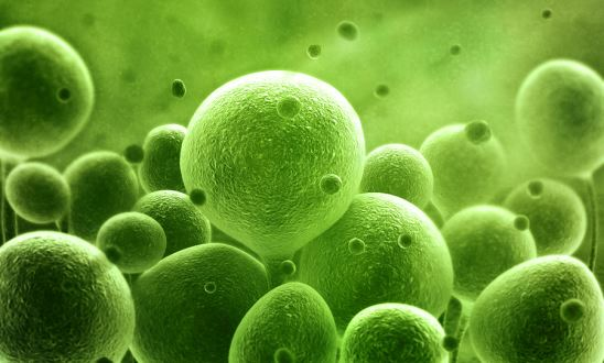 How Fast Does Bacteria Grow?