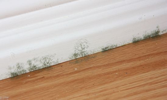 Ten Ways to Prevent Mold from Growing in Your House